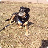 Adopt A Pet :: Ryan - La Crosse, WI