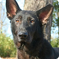Adopt A Pet :: Ebony - Nashville, TN