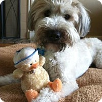 Adopt A Pet :: Maggie Mae in PA - North Kansas City, MO