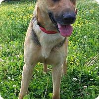 Adopt A Pet :: Trixie - Louisville, KY