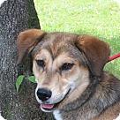 Adopt A Pet :: Bobbie Jo B female