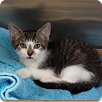 Adopt A Pet :: Biscuit - East Brunswick, NJ