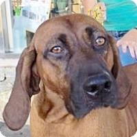 Adopt A Pet :: Avery - Canoga Park, CA