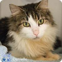 Adopt A Pet :: Danielle - Merrifield, VA