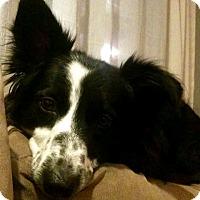 Adopt A Pet :: Bree - All Cities, SC