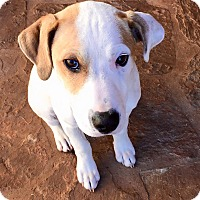 Adopt A Pet :: Marley in Austin PENDING - San Antonio, TX