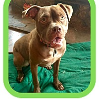 Adopt A Pet :: Petey - Milton, GA