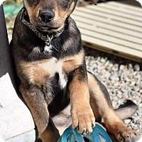 Adopt A Pet :: Emile - Pleasant Plain, OH