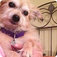 Adopt A Pet :: GRETEL - Christiana, TN