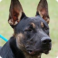 Adopt A Pet :: Pierre - Preston, CT