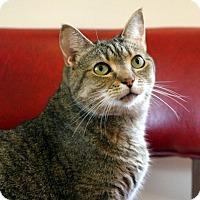 Adopt A Pet :: Moxie - Gaithersburg, MD