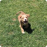 Adopt A Pet :: Elliott - Yuba City, CA