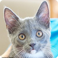Adopt A Pet :: Peter - Huntsville, AL