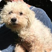 Adopt A Pet :: Precious - Clarkston, MI