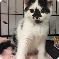Adopt A Pet :: Penelope - Furlong, PA