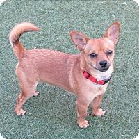 Adopt A Pet :: Jerry - Norwalk, CT