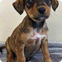 Adopt A Pet :: ADOPTED!!!   Fern - Gahanna, OH