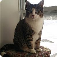 Adopt A Pet :: Marshall - Cedar Springs, MI
