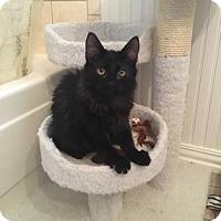 Adopt A Pet :: Kiwi - Bulverde, TX