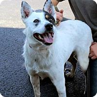 Adopt A Pet :: LANNIE - Salem, NH