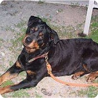 Adopt A Pet :: Ru-Bee - Cuddebackville, NY