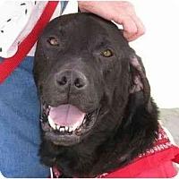 Adopt A Pet :: SKYLAR - La Mesa, CA