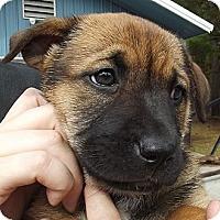 Adopt A Pet :: Bianca - Jackson, TN