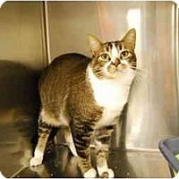 Adopt A Pet :: Paddy - Modesto, CA