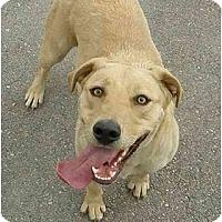 Adopt A Pet :: Nala - Meridian, ID