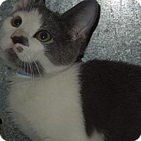 Adopt A Pet :: Cleon - Medina, OH