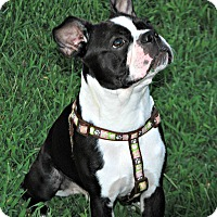 Adopt A Pet :: Oscar - Adoption Pending - Greensboro, NC