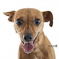 Adopt A Pet :: Polly - Tustin, CA