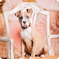 Adopt A Pet :: Pixel - Portland, OR