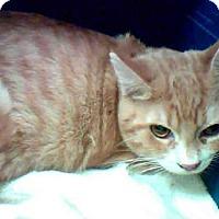 Adopt A Pet :: DYLAN - Conroe, TX