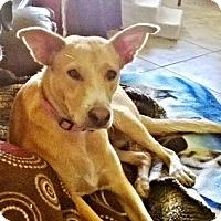Adopt A Pet :: Jenna - Gilbert, AZ