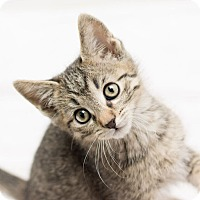 Adopt A Pet :: Mack - Fountain Hills, AZ