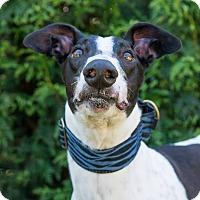Adopt A Pet :: Puckett - Seattle, WA