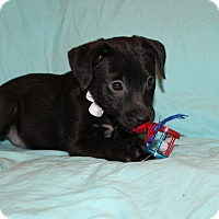 Adopt A Pet :: Jason - Buffalo, NY
