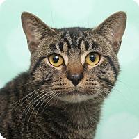 Adopt A Pet :: Ziggy - Chippewa Falls, WI