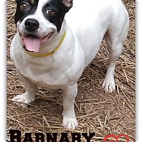 Adopt A Pet :: Barnaby James - Chester, CT