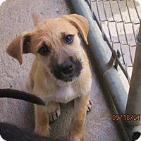 Adopt A Pet :: RHEA - Rocky Hill, CT