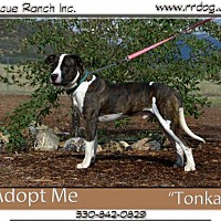 Adopt A Pet :: Tonka - Yreka, CA