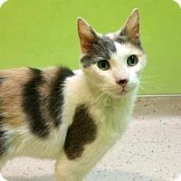 Adopt A Pet :: Cali - Janesville, WI