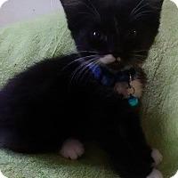 Adopt A Pet :: Garnet - Flint, MI