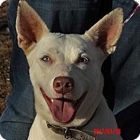 Adopt A Pet :: Diamond(60 lb) New Pics/Video - Burlington, VT