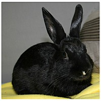 Adopt A Pet :: Squash - Forked River, NJ