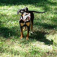 Adopt A Pet :: Tallulah - Baytown, TX