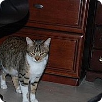 Adopt A Pet :: Keno - Auburn, CA