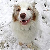 Adopt A Pet :: Bentley - Washington, IL