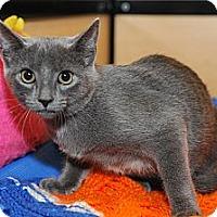 Adopt A Pet :: Sybil - Farmingdale, NY